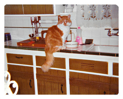 Vintage photo of an orange and white cat sitting on a kitchen counter in 1977 at 1776 Sweetwood Drive in Broadmoor, California