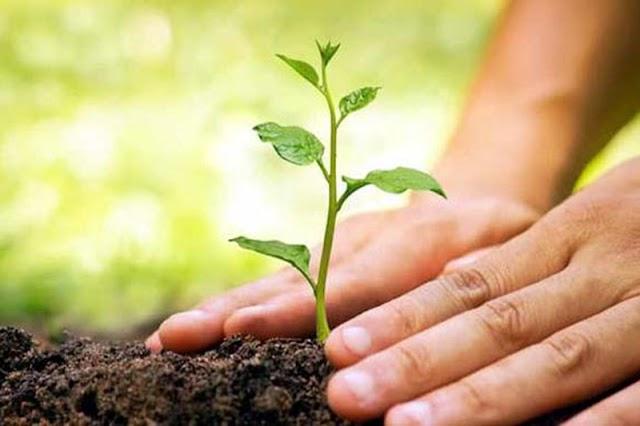 जागतिक पर्यावरण दिनापासून लोकसहभागातून वृक्ष लागवडीच्या मोहिमेचा शुभारंभ - wadhona