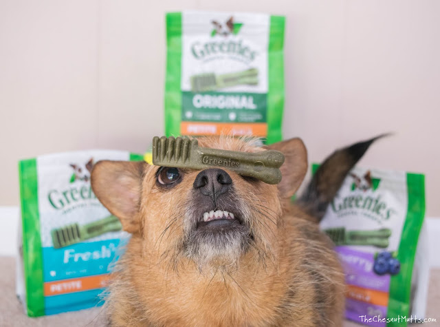 Mini Review: Greenies Dog Dental Chews