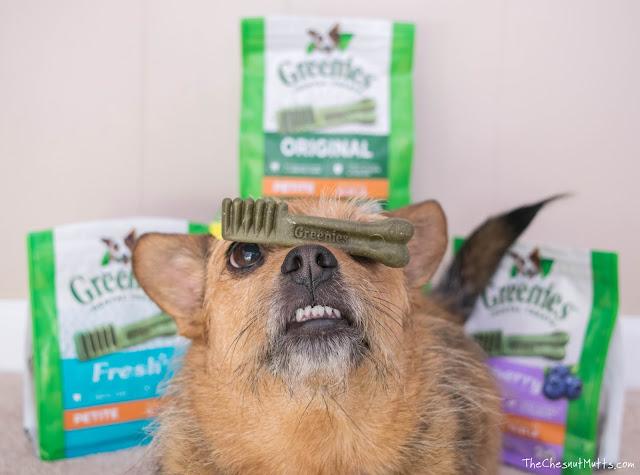 Mini Review: Greenies Dog Dental Chews