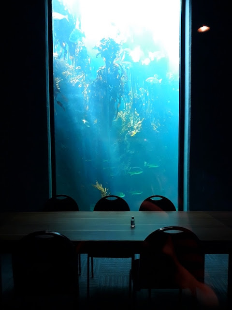 The kelp forest as seen through a boardroom at the Two Oceans Aquarium, Cape Town