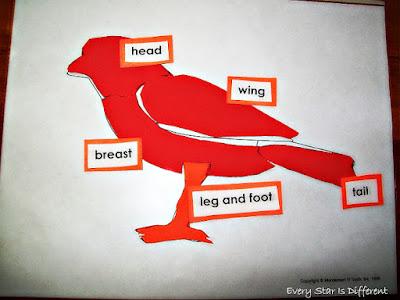 Parts of a Bird Puzzle