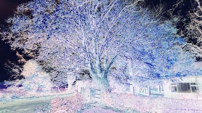 Negative photo of a beautiful Tree