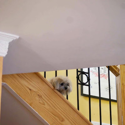 Trixie's Favourite Hiding Spot on the Stairs