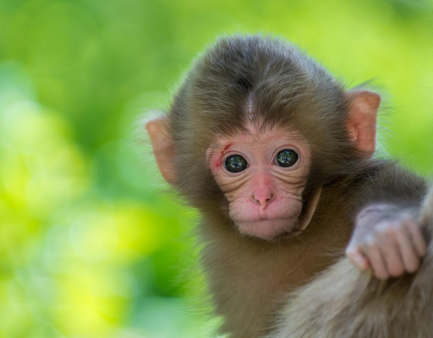 Ông vua nọ có con khỉ mà ông ta quý hơn tất cả mọi thứ trên đời. Khỉ luôn luôn có mặt bên cạnh nhà vua.
