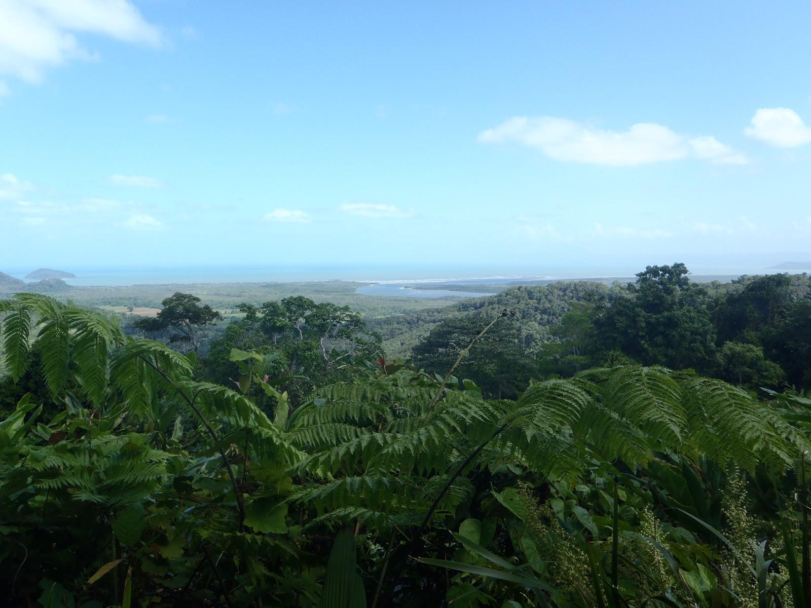 koralliriutat ja sademetsät