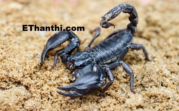 சயனைட் கொலையாளி வைத்தியராய் - விசித்திரமான விஞ்ஞானி !