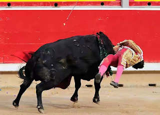 Teenage bullfighter gets gored by vicious bull