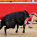Teenage bullfighter gored by vicious bull gets up and finishes the job