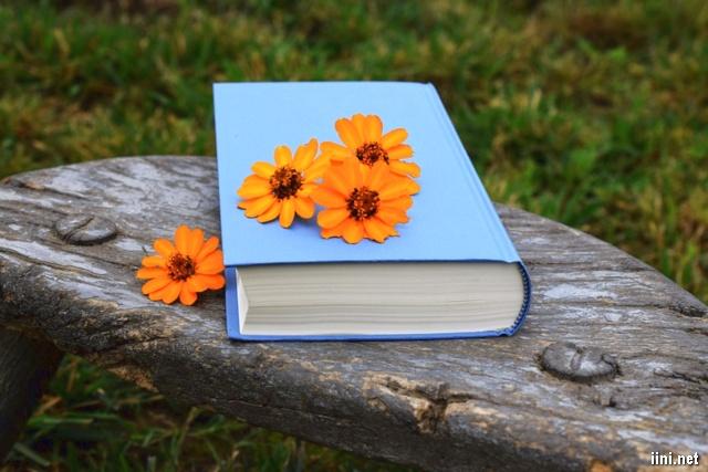 ảnh những cánh hoa màu cam bên sách
