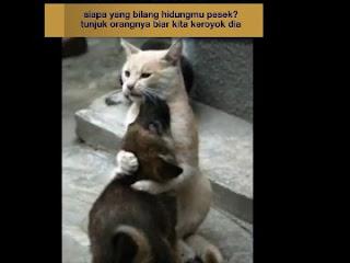 Meme Cinta kucing dan anjing