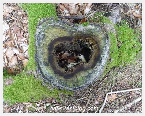 Baumstammherzchen