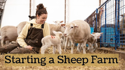 sheep farming guide for beginners
