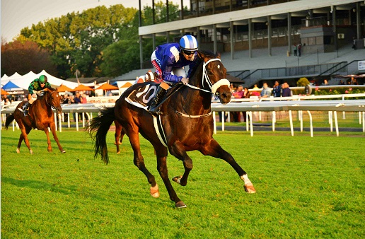 Star Colt Hawwaam Switching From SA To UK