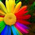 🍏 iphone x wallpaper hd 1080p flower