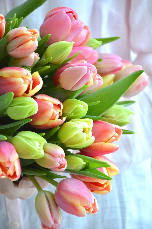 tulppaanit-hempät-värit