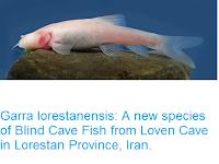 https://sciencythoughts.blogspot.com/2016/05/garra-lorestanensis-new-species-of.html