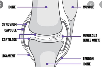 No evidence losing weight before knee surgery beneficial
