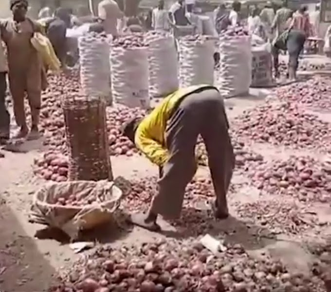 Traders in Kano lament as onion bag sold in the South for N35k crashes to N7k in the North (video)