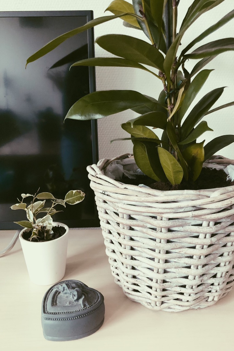 Haal meer groen in huis met PlantRebelz. Met mooie kamerplanten en stekjes uit eigen kassen.