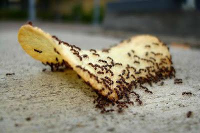 القرفة تساعد على التخلص من النمل