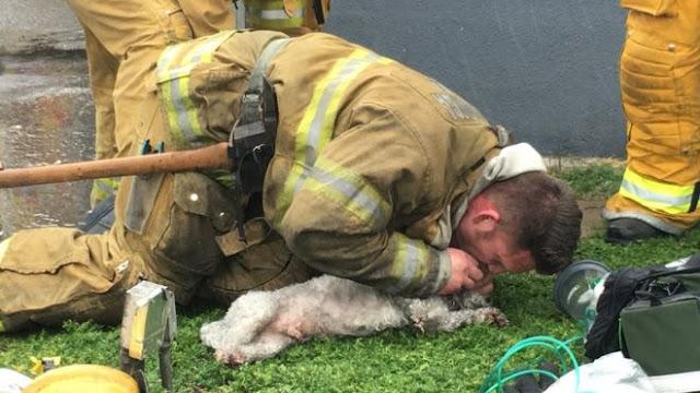 Пожарный реанимировал маленькую собаку с помощью искусственного дыхания «рот-в-рот»