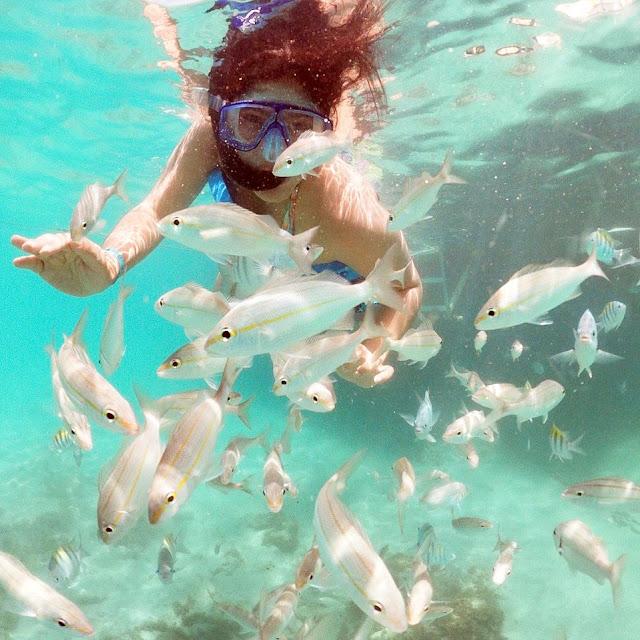 mulher jovem mergulhando com os peixes em aguas do mar esverdeadas