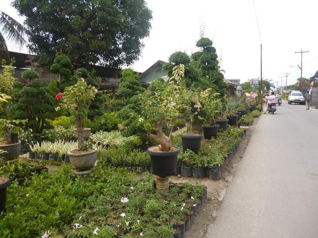 Kampung Wisata Bunga Bangun Sari