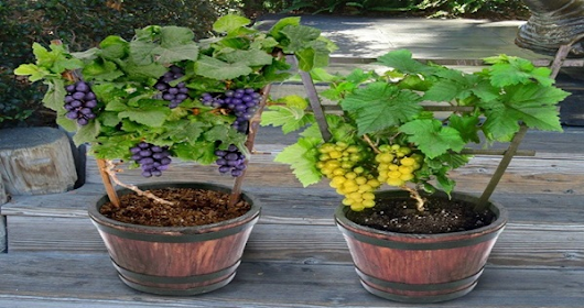 Save Money On Fruits. Expert Gardener Shares 7 Fruits You Can Grow Right At Home
