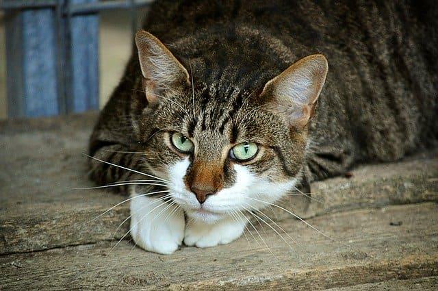 Fisik Kucing Hamil