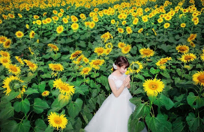 Hoa hướng dương đẹp nhất thế giới 26