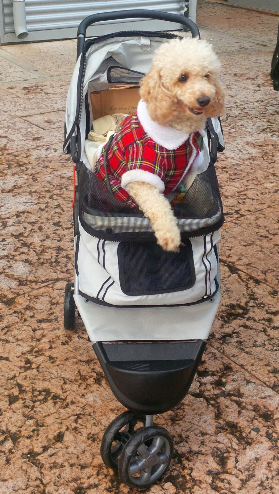 A dog in a tartan top in a stroller