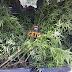PM apreende pés de maconha em casa abandonada no bairro Vaquejada, em Serrinha