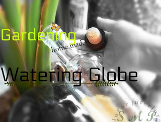 Potted plants Watering Globe or Sphere