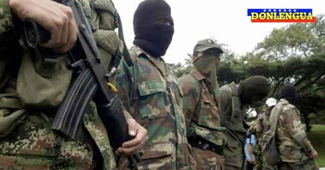 Delincuentes protegidos por Maduro reclutan jóvenes para cultivar marihuana y cocaína en Apure