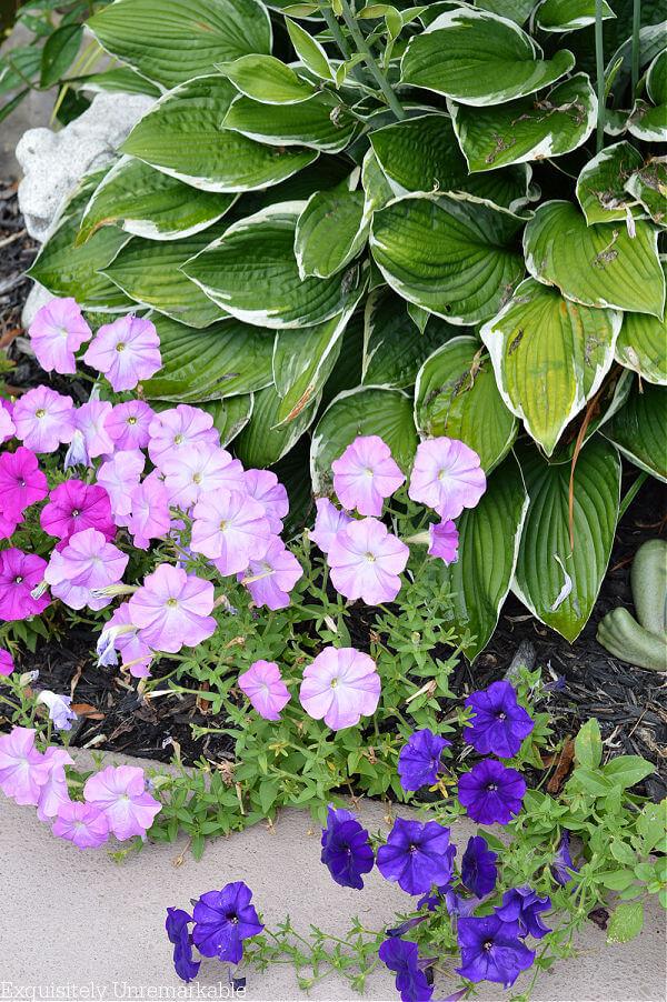 Cottage Style Garden Plants