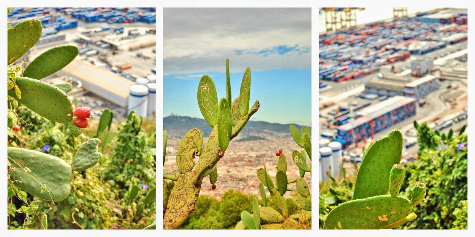 kaktusy w Hiszpanii