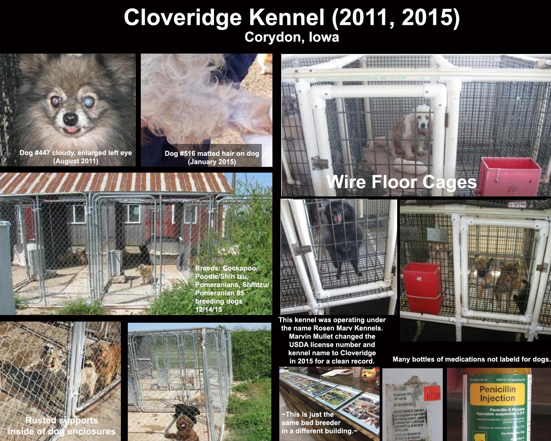 Puppy Mill Awareness Southeast Michigan: I urge you to