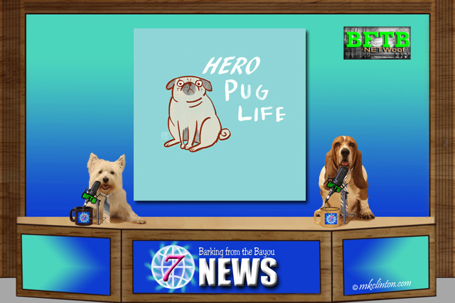 BFTB NETWoof News Pug hero story