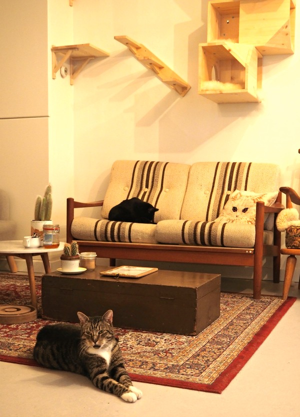 netherlands cat café