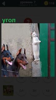 на углу дома стоит кошка и собаки с другой стороны