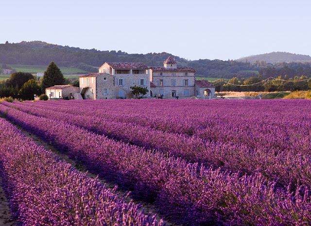 Lavender fields , Provence, France