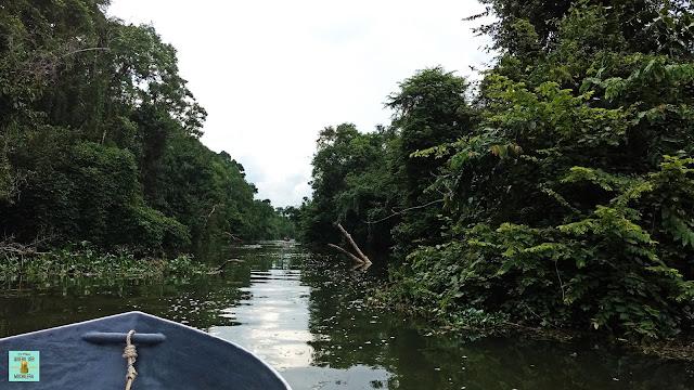Safari por el río Kinabatangan, Borneo (Malasia)