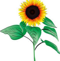Gambar Bunga Matahari Dan Cara Menggambar Bunga Matahari Sketsa Dan Lukisan Menggunakan Pensil Kuas Atau Komputer