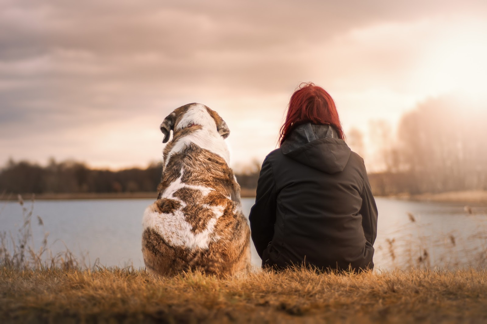 Dogs Can Recognize a Bad Person