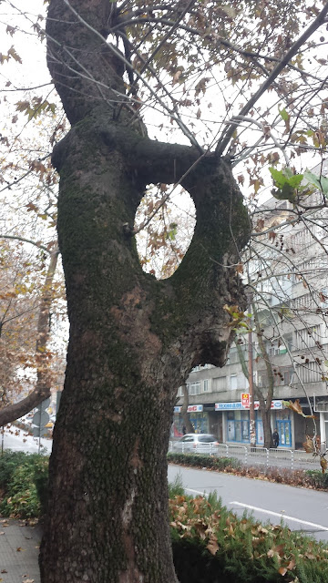 Tree, Tree Trunk, Hole, Yambol,