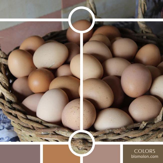 variedad_en_color_color_38