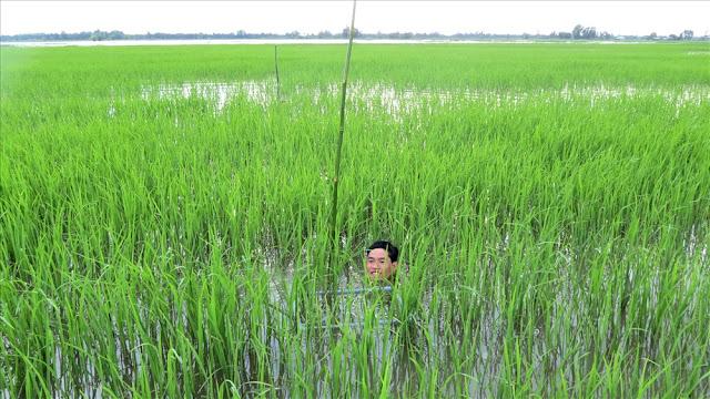 Khi đồng đất ngập sâu hơn đầu người, cây lúa nổi vẫn cứ nổi giữa biển nước mênh mông.