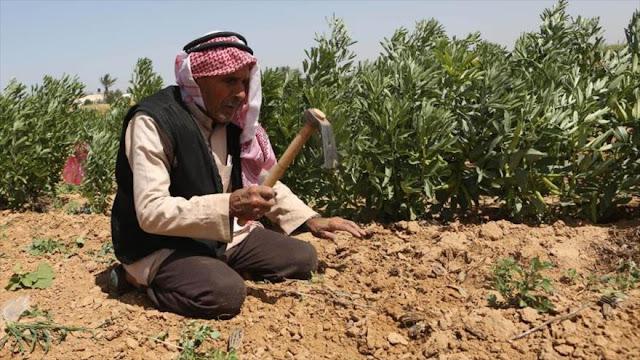 Israel rocía sustancias químicas sobre tierras agrícolas en Gaza