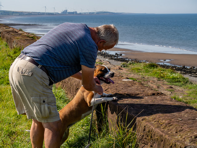 Photo of Phil clipping Ruby's lead onto her collar as she looks out to sea